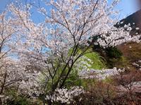 桜満開  関西版画展始まる。 - 石のコトバ