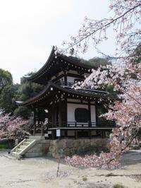 桜 - とりさんの寡黙な日記帳