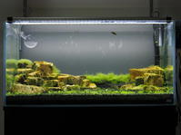 アクアリウム水草水槽900×450×450経過報告 - 好事家な生活