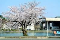 ことしも〆はバス停の桜 - 気楽おっさんの蓼科偶感