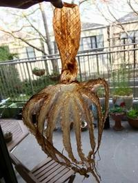 春の晩餐と蕨のテリーヌ - グルグルつばめ食堂