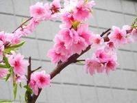 スミレの花~♪ - うまこの天袋