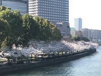 桜ノ宮の桜♪ - ☆おきらく専業主婦日記☆