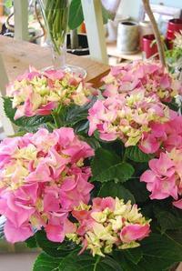 季節の花鉢の贈り物 - 花と暮らす店 木花 Mocca