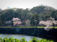 3月25日*皇居東御苑の桜 - ぴきょログ~軽井沢でぐーたら生活~