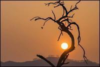 「阿武隈物語・・・朽ちてもなお」今まで 何度太陽を抱(いだ)いたのだろう - 花のこみち
