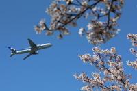 飛行機と桜! - ONE WAY
