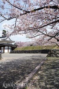 【西尾市】西尾歴史公園お花見 - クイコ飯-2