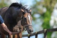 VODKAウオッカ牝・14歳の現在もアイルランドで繋養生活を送る、かわいい鹿毛の馬。 - QUEEN ROSE クイーンローズ