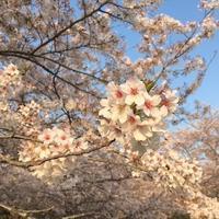 わたぬきさんの日 - 千葉の香りの教室&香りの図書室 マロウズハウス