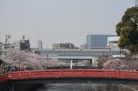 東京さくら巡り(目黒川を遡上) - マルオのphoto散歩