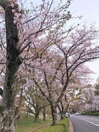 ちょこっと桜♪ - おだやかなとき