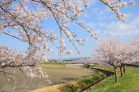 戸上川堤の桜 - Ryu Aida's Photo