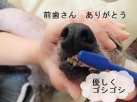 ヌク、歯を抜く - 毎日笑顔♪ 裸犬☆温・真珠・絆愛Ⅱ