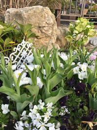 ホワイトがテーマのアトリエ花壇 - 花の庭づくり庭ぐらしガーデニングキララ