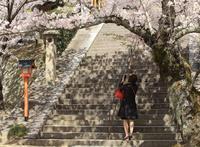 """春爛漫""""尾道西国寺の桜""""そのⅡ - 鞆の浦ロマン紀行"""