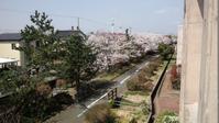 春のお花見物件 - オイラの日記 / 富山の掃除屋さんブログ