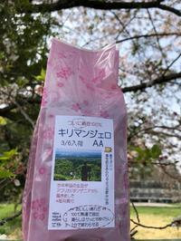 さくら咲くキリマンジェロかおる - ニコニコ珈琲日記
