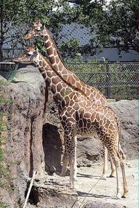 「ジャンプ」と「マリ」 - 動物園放浪記