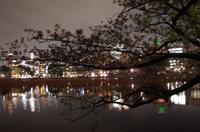 桜が散っても上野公園 - もるとゆらじお