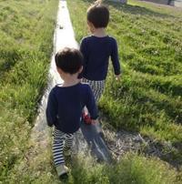 れんげ摘み - がちゃぴん秀子の日記