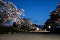 金比羅山・瀬戸川堤の夜桜 - やきつべふぉと