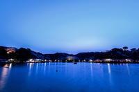 蓮華寺池公園の夜桜 - やきつべふぉと