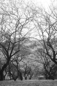 裏高尾梅街道を歩いて5 - はーとらんど写真感