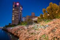 源八橋界隈の桜 - シセンのカナタ