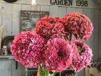 ステキな切花、入荷しました♪♪ - ブレスガーデン Breath Garden 大阪・泉南のお花屋さんです。バルーンもはじめました。