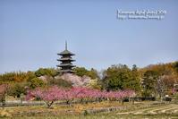 吉備路の春3/31 - 気ままな Digital PhotoⅡ
