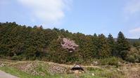 4/15森林アドベンチャー養成講座『森の除伐と植樹の体験』 - えひめ千年の森をつくる会 イベント・活動のご案内