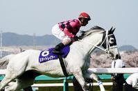 今年の主役誕生か、スワーヴリチャードの大阪杯(1)返し馬 - Turfに魅せられて・・・(写真紀行)
