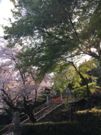 散る桜も美しい - 京都西陣 小さな暮らし