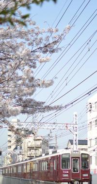 阪急電車と桜 - カンパーニュママの暮らしの雑貨とポメプーころすけと日々の出来事日記