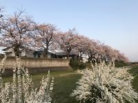 東京へお花見へその1 - のんびりいこうやぁ 2