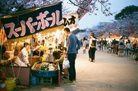 夜桜探検 - SWEET SWEET JAMMYS