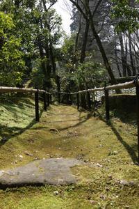 苔に感動 - CHIROのお庭しごと