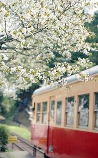 桜が見送るホームにて - またいつか旅に出る