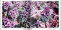 吉備路の野の花たち - ひとりあそび