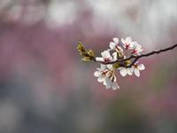桜児島公園 - 風まかせ、カメラまかせ