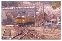 私の駅の桜と電車。 - Yuruyuru Photograph