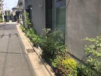 「梅ラウンジの庭」4月1週目(2年目) - HAN環境・建築設計事務所