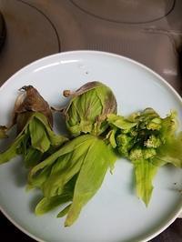 ふきのとうは天ぷらに - 牡蠣を煮ていた午後
