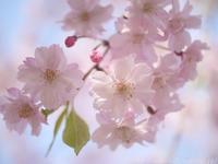 優美な花 - ほっとひと息