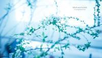 pocapoca biyori - Happy photo gallery Ⅱ