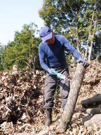 原木しいたけコマ打ち作業2018多くの手間ひまと長い年月をかけ至高のしいたけを育てあげます!(後編) - FLCパートナーズストア