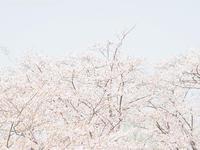 春霞 - M2_pictlog