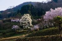 宇陀界隈の桜等 - toshi の ならはまほろば