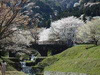 『国の名勝及び天然記念物の霞間ヶ渓(かまがたに)の桜風景~』 - 自然風の自然風だより